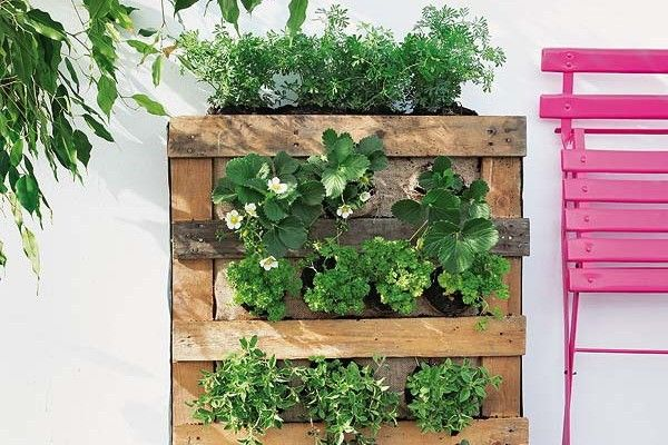 Features of vertical garden DIY